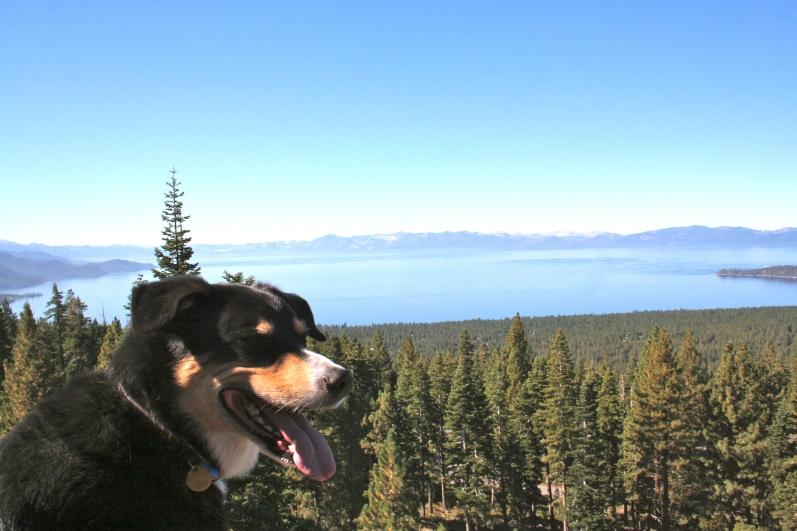 Zephyr likes Lake Tahoe!