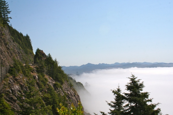 They say, beneath the fog, that the Oregon coast is beautiful. The trees were lovely anyway...