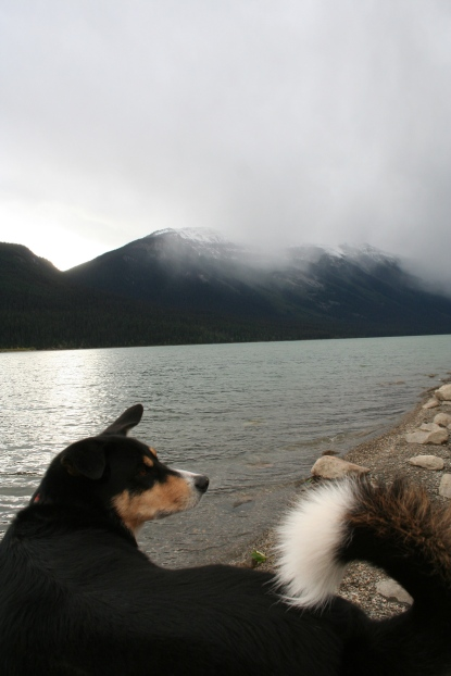 Zephyr enjoyed our morning stop at a misty lakeside
