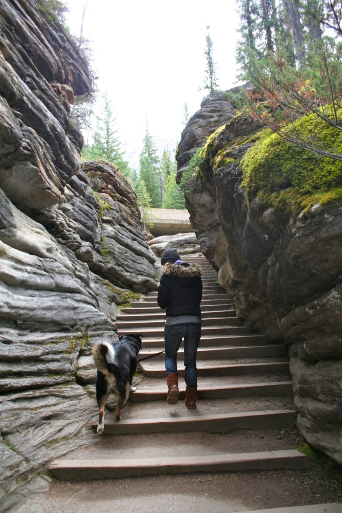 Canadian National Parks are much more dog-friendly than their US counterparts. For this we (and Zephyr) were grateful!