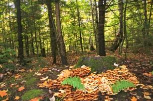 A fairy wonderland mushroom garden in the White Mountains