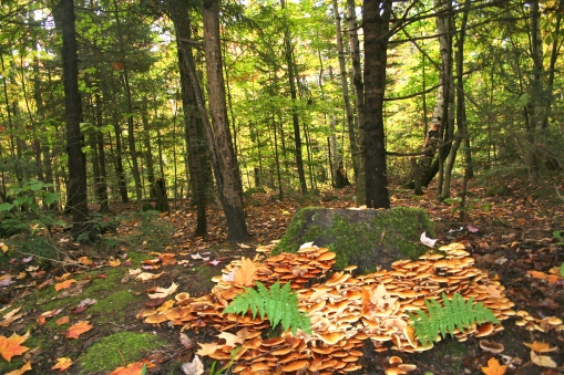 A fairy wonderland mushroom garden in the White Mountains
