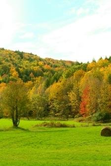 Manicured green hay fields always look amazing next to wild spaces