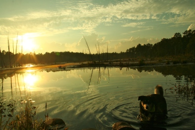 Sunset at the Pine Barrens