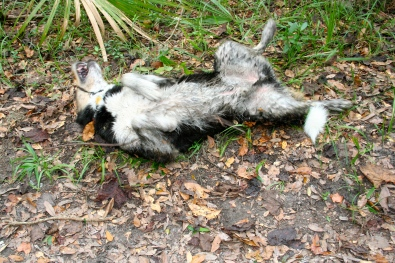 Beware the dreaded stinky Swamp Dog!