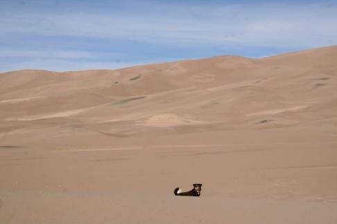 Big dog, bigger dunes