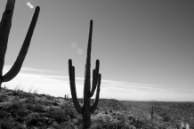 Nothing reminds me of my childhood like the sight of the stoic saguaro