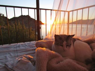 """Snowflake, the resident """"desert cat"""" enjoys the sunrise"""