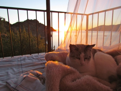 "Snowflake, the resident ""desert cat"" enjoys the sunrise"