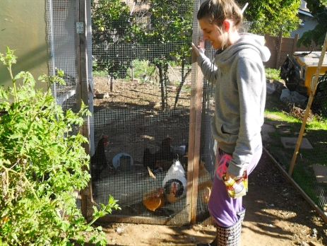 I was usually the first up in the mornings to feed and release our backyard chickens. I can't WAIT to have fresh eggs again!