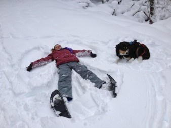 I made a snow angel. Zephyr was unimpressed.