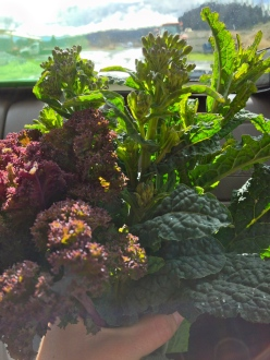 My favorite lunch...mixed varieties of freshly picked kale!