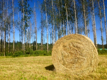 "Nothing says ""farm life"" quite like a giant bale of hay!"