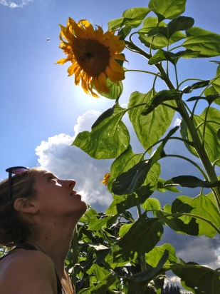 The last of the stalwart sunflowers just before the clouds descended (forever?)
