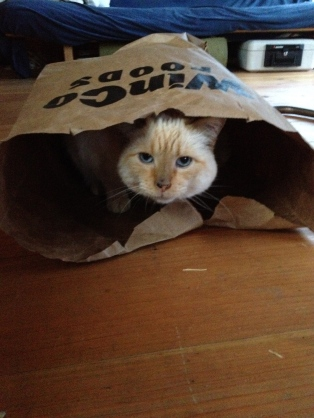 "We still have an adorable, ""special"" cat by the way. Sometimes she plays in bags. She's the cutest!"