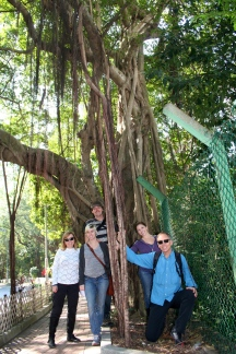 One of the banyan trees growing into the sidewalk. Oh, and that's my family!