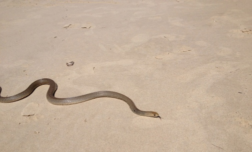 The extremely deadly and completely underwhelming brown snake