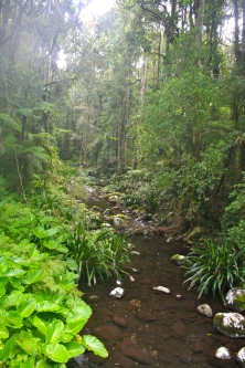 Gorgeous rainforest creek