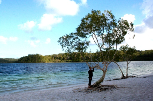 The trees have to adapt to sandy soil and a lack of nutrients in the acid lake