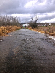 "The ""great flood"" of 2014! This is our road into the farm. It only looked like this for a day though."