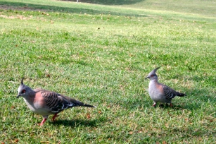 Punk rock pigeons!