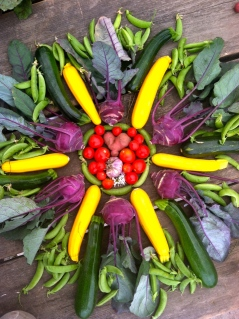 Sam made a vegetable mandala one day with some freshly harvested goodies.