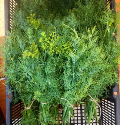 Dill! For pickles!