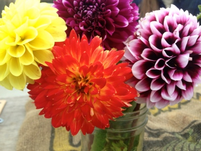 Dahlias are amazing