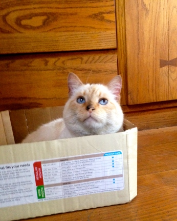 Because what's a blog post without a cat photo? And what's cuter than a cat in a box?