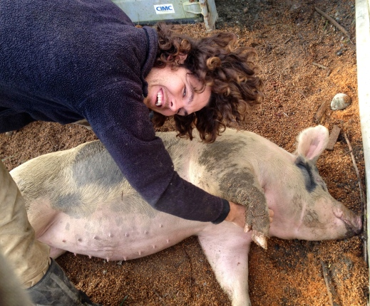 Ok, maybe my adorable husband giving a belly rub to a pig is cuter than a cat in a box. Maybe.