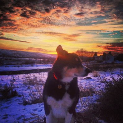 Zephyr enjoying the sunset in Idaho