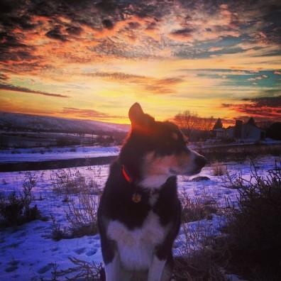 Zephyr enjoying the sunset in Idaho