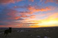 Zephyr enjoying another lovely sunset