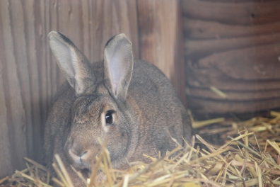 Alice's bunny!